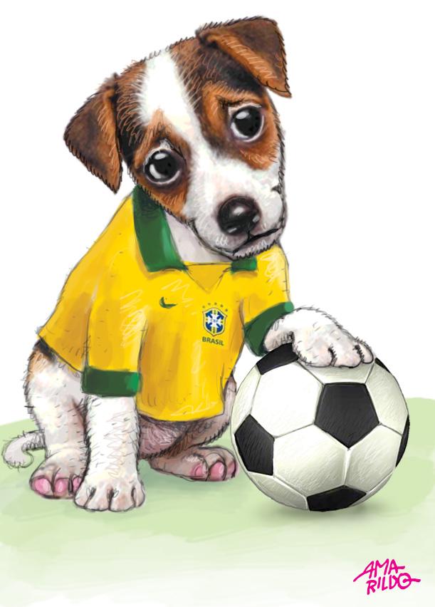 Cachorro camisa selecao brasileira bola vira lata