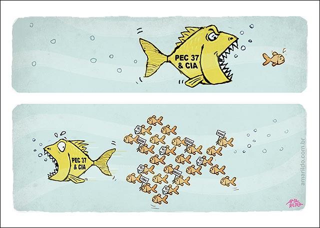 Peixe come peixinhos pec 37 protestos