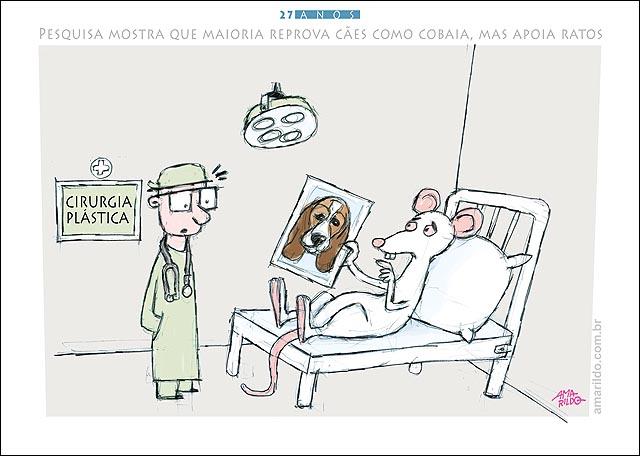 Rato Beagle Cirurgia plastica foto opera hospital pesquisa aprova uso de taratos cobaia