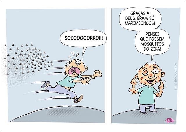 Dengue ZIKA Chikogunya mosquito marimbondo abelhas